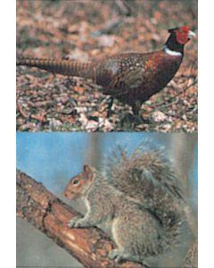 Delta McKenzie skydeskive Fasan og egern 50 x 70 cm