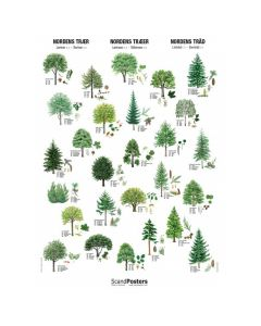 Plakat med nordens træer 70x100 cm