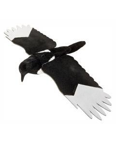 Husskade lokkefugl med vinger og flock